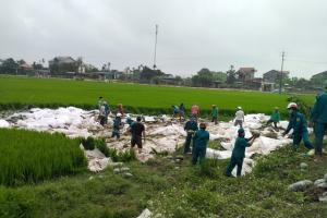 Hàng chục người giải cứu 25 tấn dưa hấu tắm bùn dưới ruộng